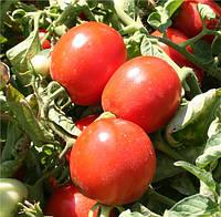 Альбароссо F1 - томат детерминантный, 10 000 семян, Agri Saaten Германия