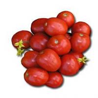 Лампо F1 - томат детерминантный, 10 000 семян,  Nunhems (Нунемс) Голландия