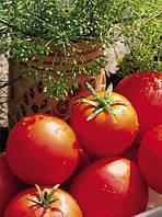Баллада - томат детерминантный, 10 000 семян, Nasko Украина