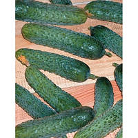Меренга F1 - огурец партенокарпический, 10 семян, Seminis (Семинис), Голландия - Фасовка