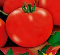 Аврора F1 - томат детерминантный, 50 гр