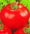 Перун F1 - томат, 1 кг, индетерминантный