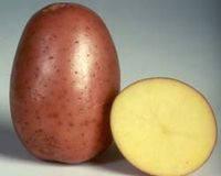 Бела Роса - весовой картофель, 1 кг