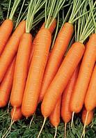 Люсия F1 - морковь, 25 000 семян, Agri Saaten (Агри Заатен) Германия