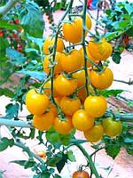 Смородина желтая – томат, 12 семян