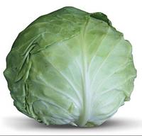 Ландегейкер – капуста белокочанная, весовая