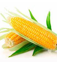 Барселона F1– сахарная кукуруза, 1 000 семян, Мнагор, Украина