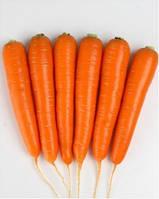 Натива F1 - морковь, 100 000 семян, Sakata (Саката), Япония