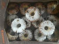Печенье Кекс изюм
