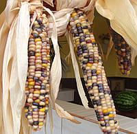 Кукуруза Индийский гигант