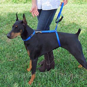 Поводок Для Собак The Instant Trainer Leash более 30 кг!Акция, фото 2