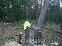 Удаление аварийных деревьев Киев.