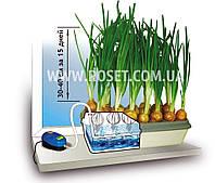 Гидропонная домашняя установка для выращивания зеленого лука - Луковое Счастье