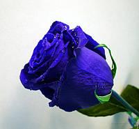 Долгосвежая роза Florich, не вянет до 5 лет. 5/37 см.