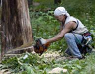 Спил деревьев,расчистка участка,кронирование,корчевание.