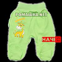Ползунки (штаны) на широкой резинке р. 80-86 с начесом ткань ФУТЕР 100% хлопок ТМ Алекс 3180 Зеленый2 80