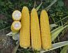 Семена кукурузы Добрыня F1 2500сем. Ларк Сидз.