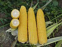 Кукуруза сахарная Добрыня F1 50 сем. Ларк Сидс (Lark Seeds)