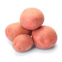 Белларосса картофель 5 кг
