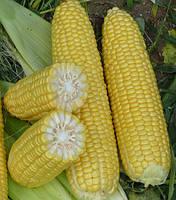 Семена кукурузы Шамо F1 2500сем. Ларк сидс.