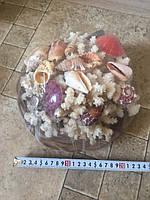 Кораллы в наборе