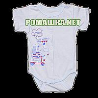 Детский боди-футболка р. 68 ткань КУЛИР 100% тонкий хлопок ТМ Алекс 3087 Голубой1