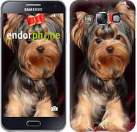 """Чехол на Samsung Galaxy E5 E500H Йоркширский терьер """"929c-82"""""""