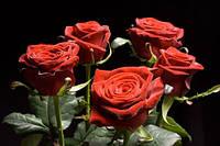 Красная роза Гран При