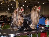 Поездки на выставки собак по Украине и Европе