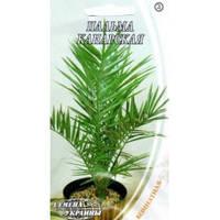 Пальма канарская /2г/ 2шт. СУ