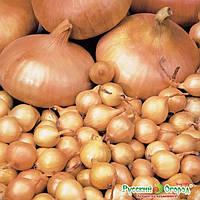 Семена лука Штутгартэн  (круглый) 1 кг.