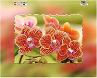 Схема СвитАрт холст XB F-204 Тигровая орхидея