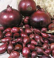 Семена лука Ред Барон (синий) 1 кг.(лучшая цена купить оптом и в розницу)