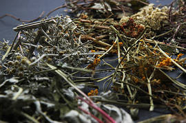 Лечебные лекарственные травы
