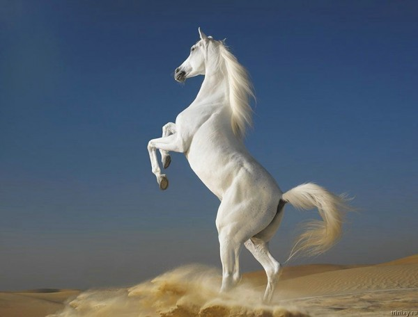 Гели для лошадей снимают боль в суставах