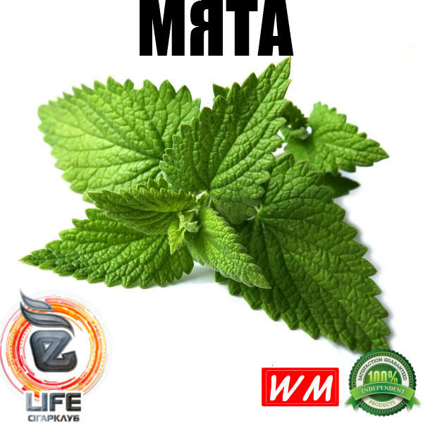 Ароматизатор World Market МЯТА