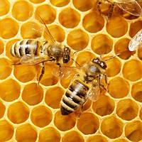 MultiChem. Віск бджолиний, 1 кг. Воск пчелиный.