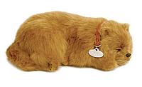 Дышащая игрушка Шпиц Perfect Petzzz