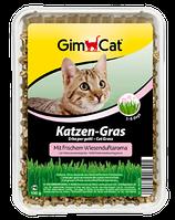 Gimpet Katzen-Gras трава з луговим ароматом для кішок в лотку 100г (G-407289)
