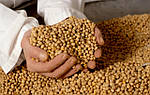 В 2017 году в Украине увеличатся засевы сои