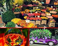 Комнатные и Уличные растения ОПТОМ