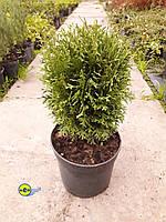 Декоративно лиственные и хвойные растения