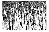 Светящиеся картина Startonight Роща Черно Белые Пейсаж Зима Печать на Холсте Декор стен Дизайн дома Интерьер