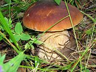Мицелий зерновой маточный Белый гриб, 250 мл