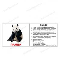 """Карточки Домана мини украинские с фактами """"Дикие животные"""""""
