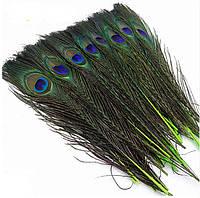Перья Жар-птицы Павлина декоративные (Перо) Зеленые 25-30 см 1 шт