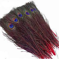 Перья Жар-птицы Павлина декоративные (Перо) Красные 25-30 см 5 шт/уп
