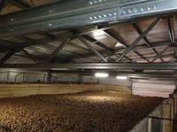 Строительство ангаров Каркасных, овощехранилищ, зернохранилищ, картофелехранилищ, коровников