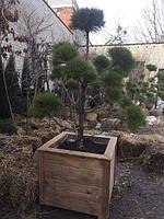 Декративный контейнер для растений (деревьев)