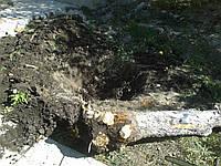 Аккуратно спилить дерево Харьков